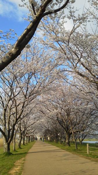 桜190402a