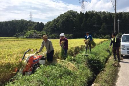 稲架掛け用 稲刈り