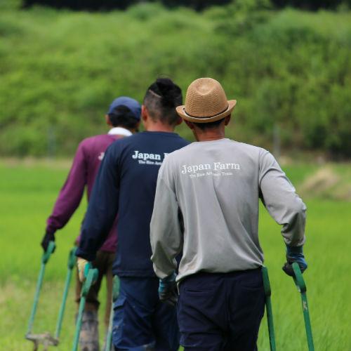 田んぼ 米職人
